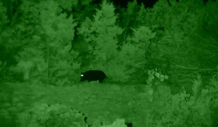 sighting in night vision scope