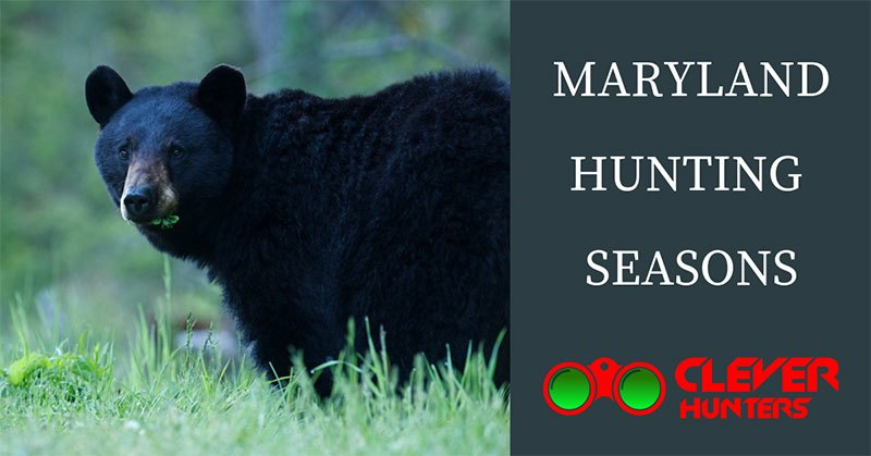 Maryland Hunting Seasons