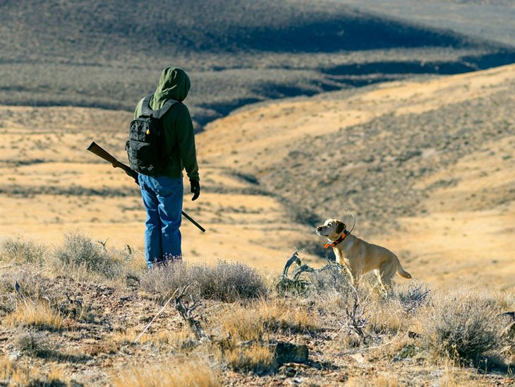 nevada wildlife hunting seasons
