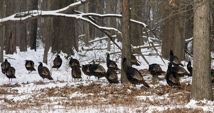 missouri hunting seasons turkey