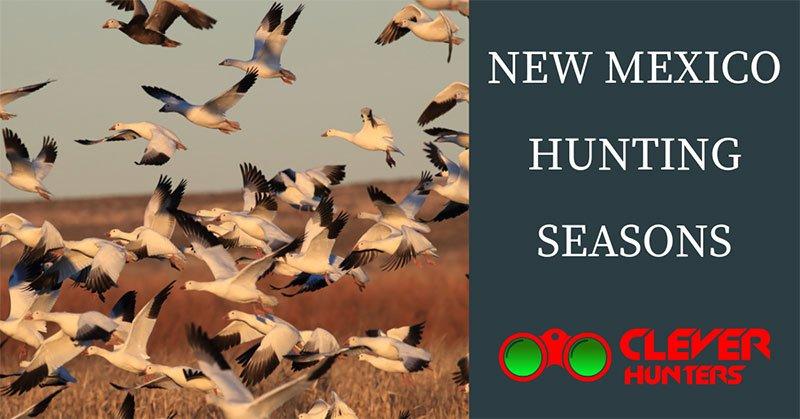 New Mexico Hunting Seasons