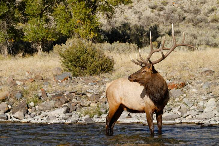 wyoming hunting seasons dates 2019